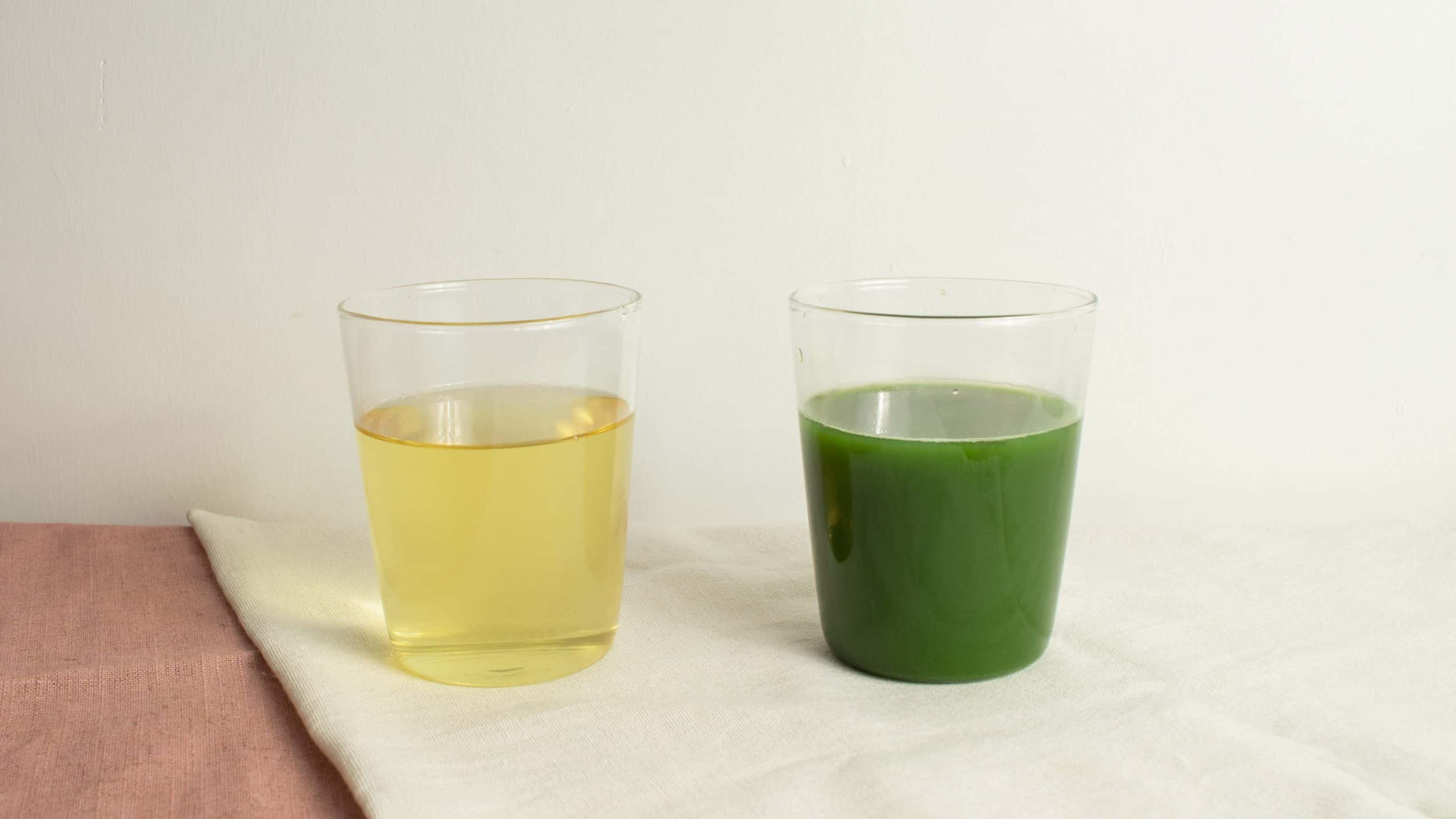 sencha green tea and matcha comparison