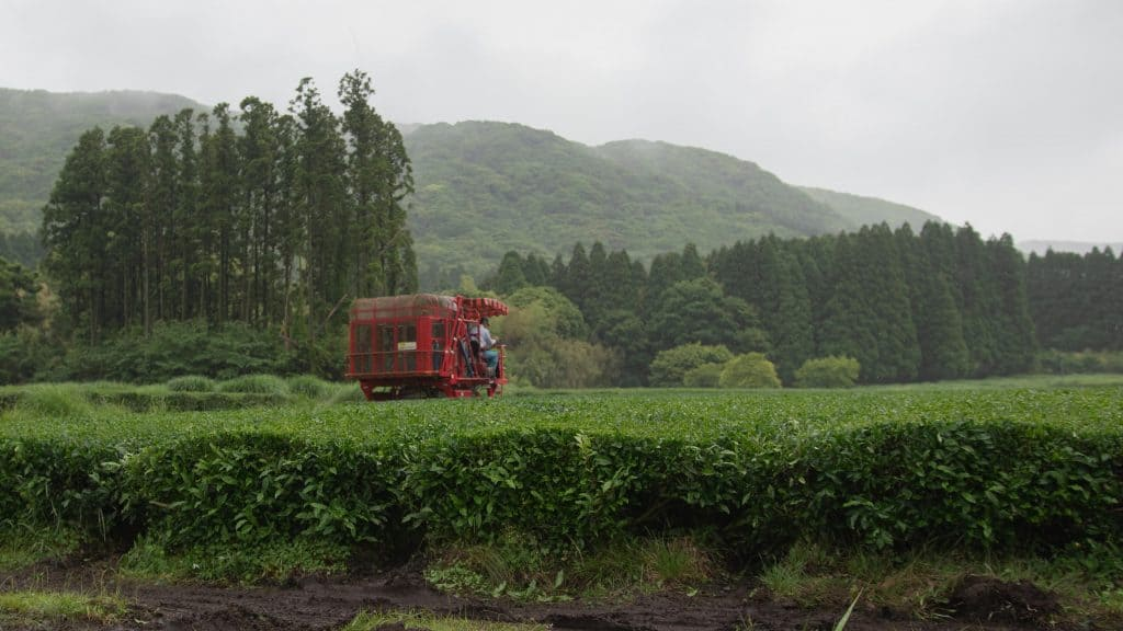 A man operating a red tractor tea harvester machine on large tea field in Kagoshima
