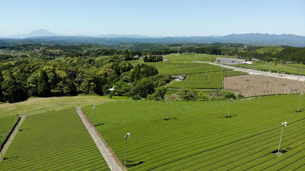 A landscape view of tea plantation field in Kagoshima