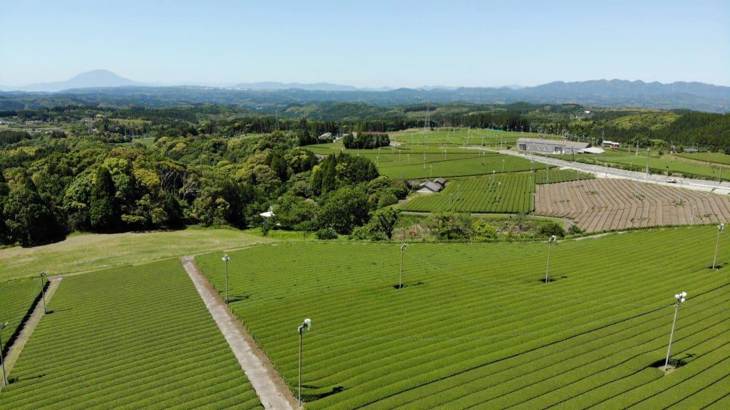 A landscape view of tea plantation field in Kagoshima