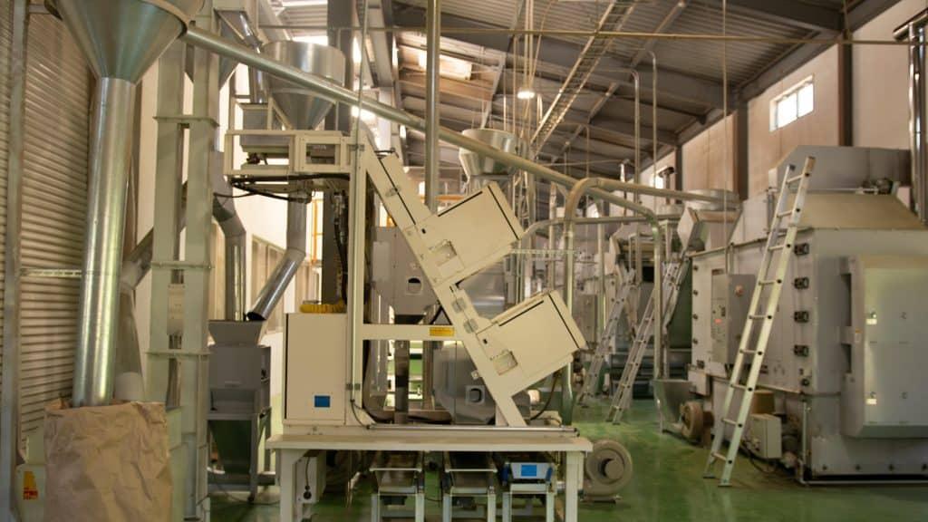 Machine processing tencha leaves