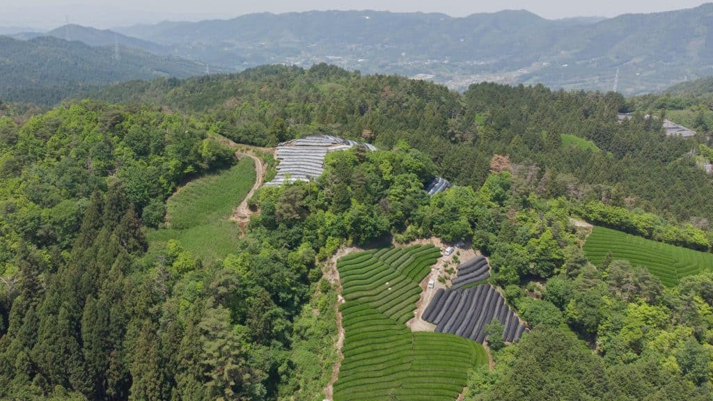 Tiny Wazuka, Japan tea plantation field and farms